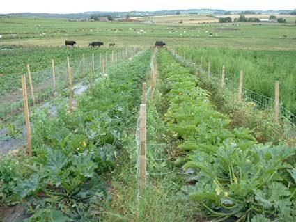 I vantaggi della Coltivazione Organica Ortoclick