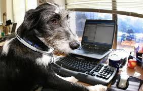 Cani in ufficio: come possono gli animali migliorare il clima sul lavoro